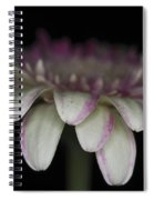 Pink And White Gerbera 3 Spiral Notebook
