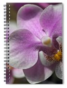 Pink And White Orchid Spiral Notebook