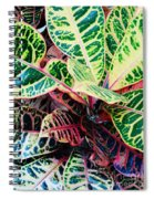 Pink And Yellow Croton Spiral Notebook