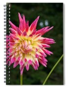Pink And Yellow Spiral Notebook
