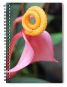 Pink And Yellow Orchids 2 Spiral Notebook