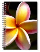 Pink And Yellow Plumeria Spiral Notebook