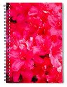 Pink Azalea's Spiral Notebook