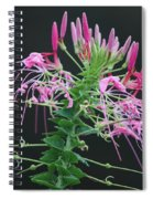 Pink Bloom Squared Spiral Notebook