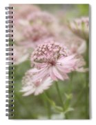 Pink Blush Spiral Notebook