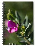 Pink Blush - Sweet Pea Bush  Spiral Notebook