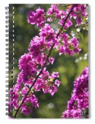 Pink Bougainvillea Sunshine Spiral Notebook
