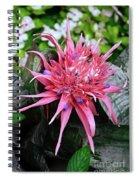 Pink Bromeliad Spiral Notebook