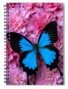 Pink Camilla And Blue Butterfly Spiral Notebook