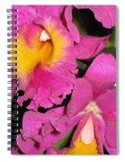 Pink Cattleya Orchid Spiral Notebook
