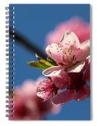 Pink Cherry Tree Blossom Spiral Notebook