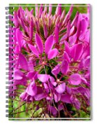 Pink Cleome Flower Spiral Notebook