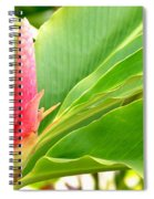 Pink Cone Ginger Bud Spiral Notebook