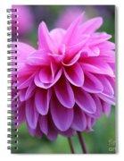 Pink Dahlia Closeup Spiral Notebook