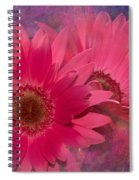 Pink Daisies Abstract Spiral Notebook