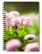 Bellis Perennis Pomponette Called Daisy Blooming  Spiral Notebook