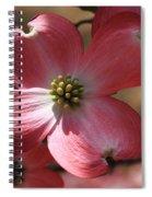 Pink Dogwood At Easter 4 Spiral Notebook