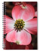 Pink Dogwood At Easter 5 Spiral Notebook