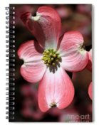 The Cross Of Christ Pink Dogwood At Easter 7 Spiral Notebook