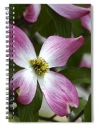Pink Dogwood Blossom Up Close Spiral Notebook