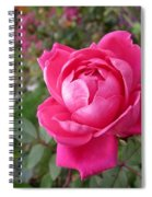 Pink Double Rose Spiral Notebook