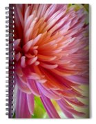 Pink Energy Spiral Notebook