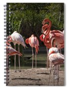 Pink Falmingos At The San Diego Zoo Spiral Notebook