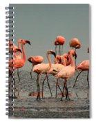 Pink Famingo Spiral Notebook