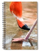 Pink Flamingo At A Zoo In Spring Spiral Notebook