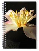 Pink Flower Azalea . Spiral Notebook