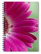 Pink Gerbera Spiral Notebook