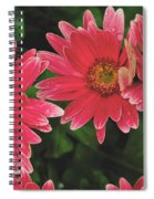 Pink Gerbera Daisy Spiral Notebook