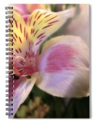 Pink Glow Lily  Spiral Notebook