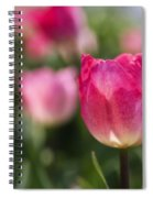 Pink Glowing Tulip Spiral Notebook