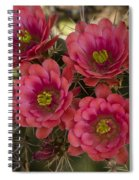 Pink Hedgehog Cactus Flowers  Spiral Notebook