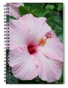 Pink Hibiscus #3 Spiral Notebook