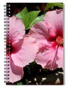 Pink Hibiscus Blooms Spiral Notebook