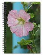 Pink Hollyhock And Rain Spiral Notebook