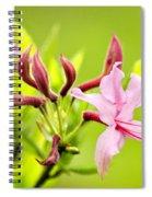 Pink Honeysuckle Flowers Spiral Notebook