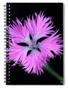 Pink Lace Spiral Notebook