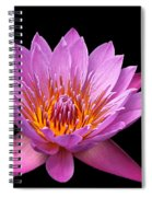Pink Lady On Black Spiral Notebook