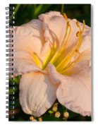 Pink Lily At Sunset 1 Spiral Notebook