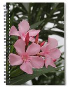 Pink Oleander 4 Spiral Notebook