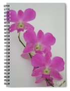 Pink Orchids 1 Spiral Notebook