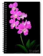 Pink Orchids 9 Spiral Notebook