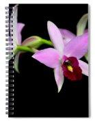 Pink Orchids Cascading Spiral Notebook