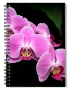 Pink Orchids In A Row Spiral Notebook