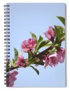 Pink Peach Blossoms Spiral Notebook