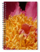 Pink Peony 3 Spiral Notebook