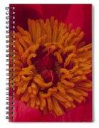 Pink Peony Stamen Macro Spiral Notebook